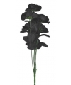 Boeket met 6 zwarte rozen
