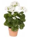 Kunstbloem witte Geranium 35 cm